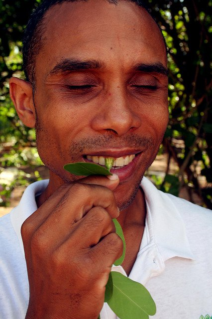 The Uncommonly-Known Dental Benefits from a Small Evergreen Shrub
